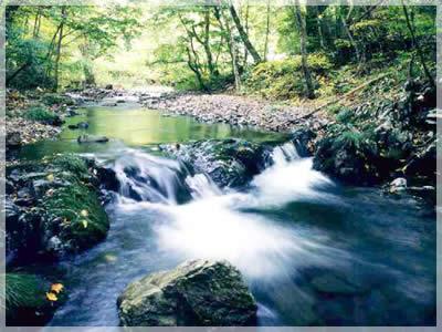 豊間根川源流