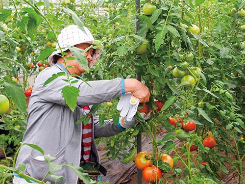 旬の野菜いろいろ 摘み取り体験