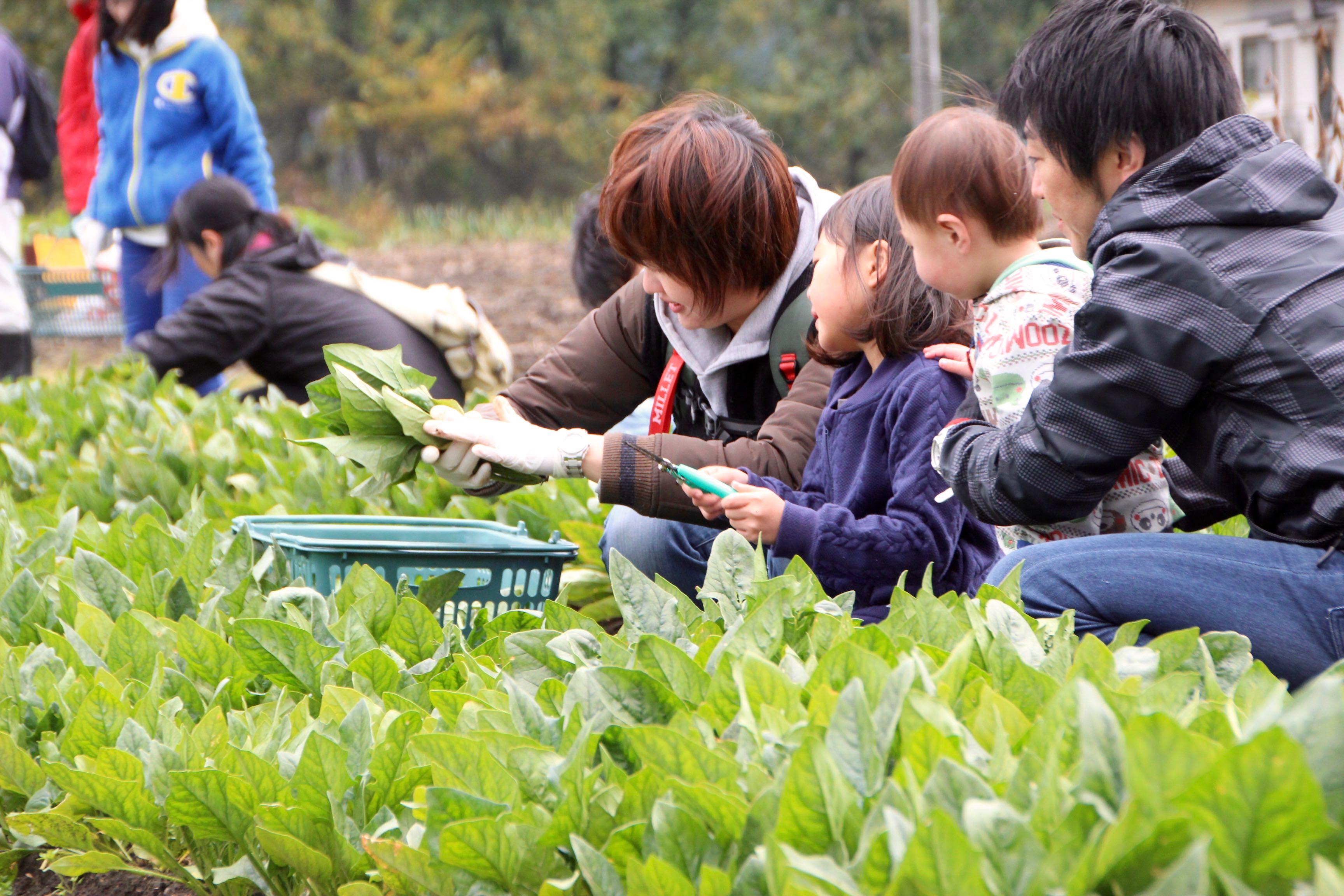 いわき農園の晩秋の野菜大収穫祭!
