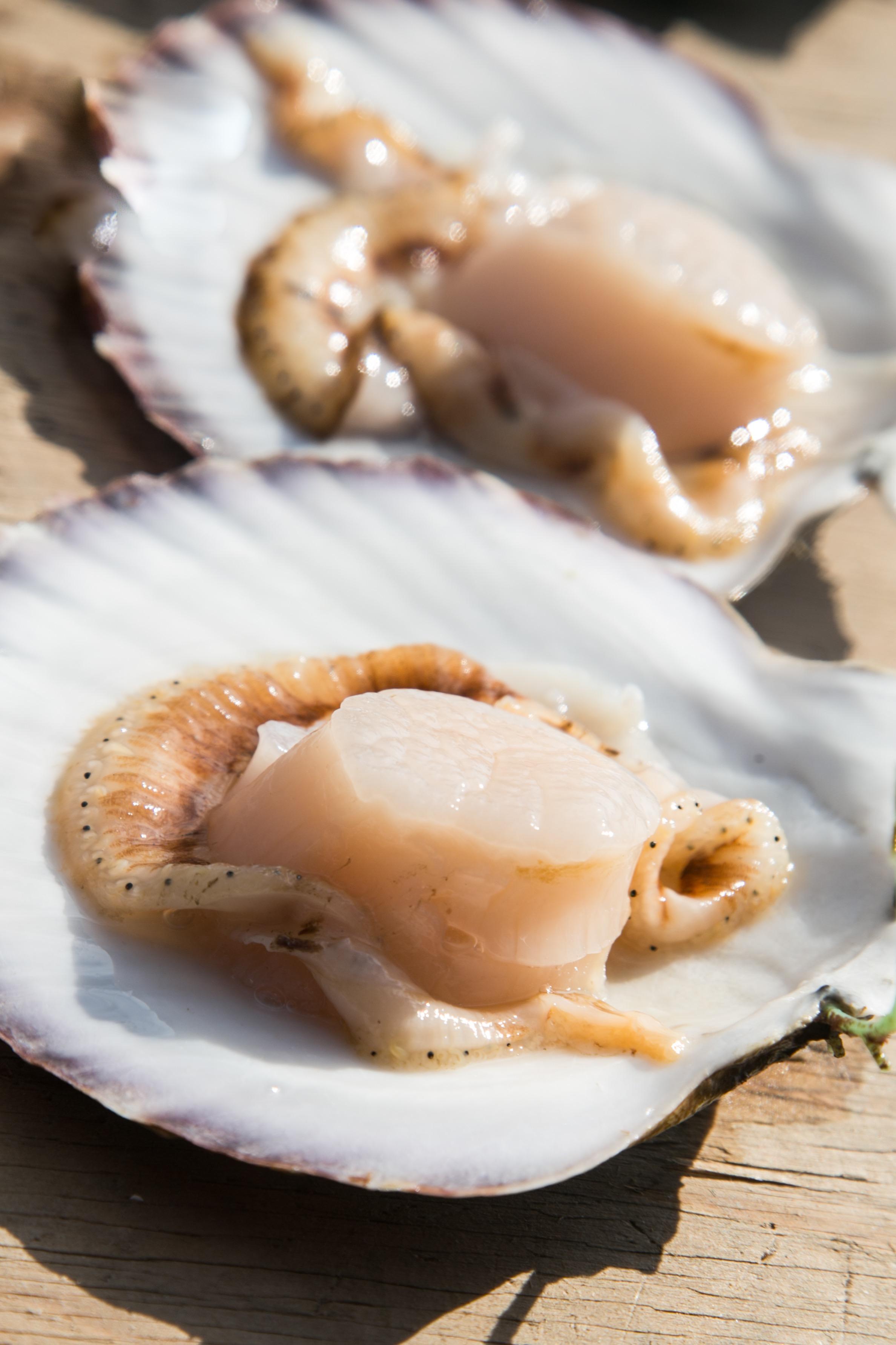 【4/25限定】「牡蠣・ホタテの養殖見学」Let's visit a oysters and scallops farm