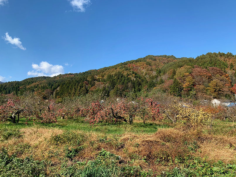 10・11月土日限定!いわき農園のカラフルニンジン&秋野菜の収穫体験